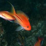 熱帯魚もいっぱい!被写体ゴロゴロ☆