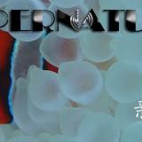 SUPERNATURALーーー!!新年海ーーーー(^^♪