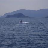 クジラでた。。鯨。。。カメもいたよ(*'∀')
